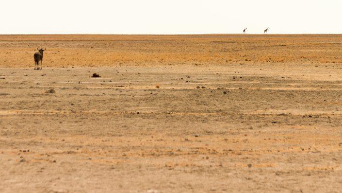 Reisfoto Willemijn de Boer | Beeld van de Boer